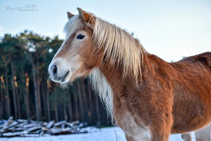 paardje_01